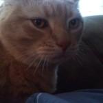 pet love cats Garfield