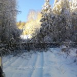 snow scenes fallen and downed trees and snow covered roads