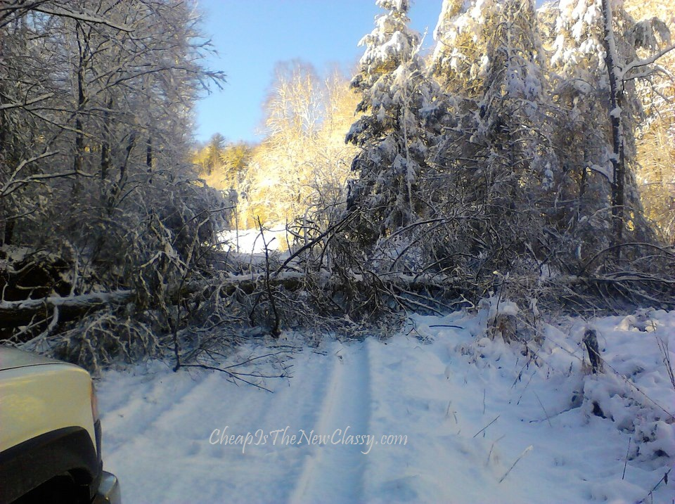 driving safety tips fallen and downed trees and snow covered roads