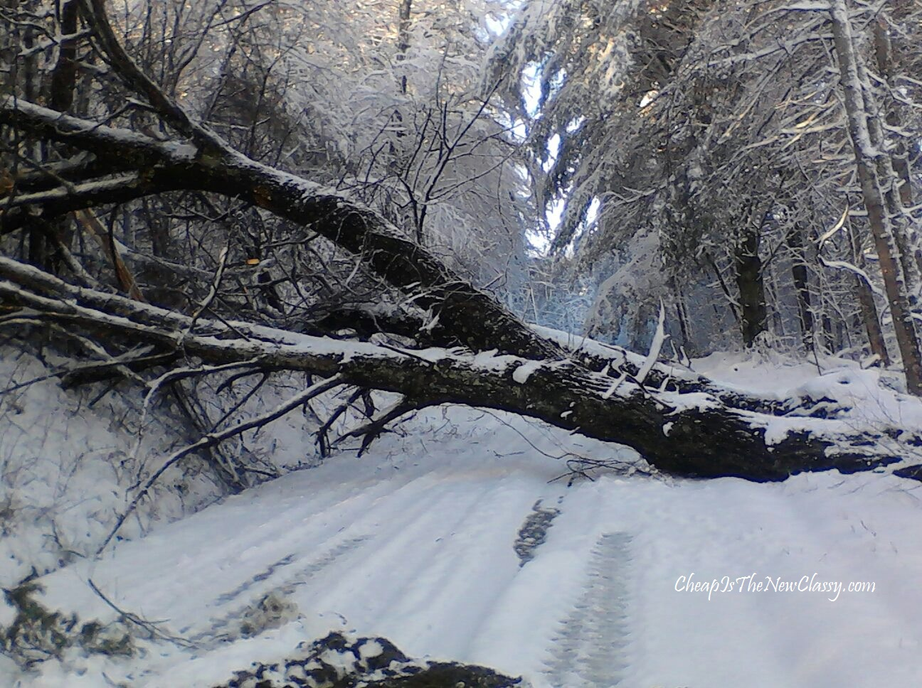 driving safety tips downed and fallen trees
