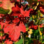 Autumn Leaves Image Credit: Clarita on MorgueFile.com