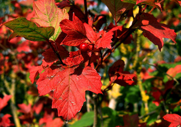 Autumn Leaves November Holidays Image Credit: Clarita on MorgueFile.com
