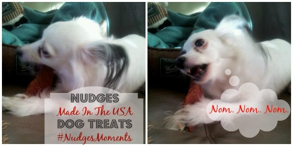 Daisy Baby enjoying her Nudges Made In The USA dog treats
