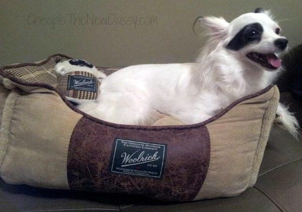 Pet Beds: Daisy Baby loves her new Woolrich Cuddler pet bed.