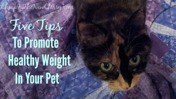 Five Tips for healthy cat and dog weight loss #sponsored