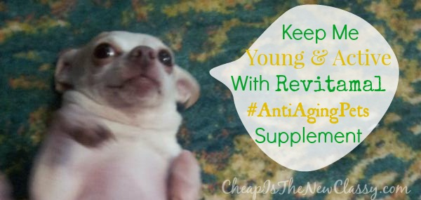 Revitamal Pet Supplement helps ease chronic pain and promotes anti-aging #sponsored