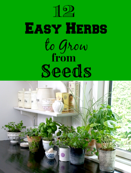 12 Easy Herbs To Grow From Seeds: The Ultimate Guide To Fresh Herbs | Cheap Is The New Classy