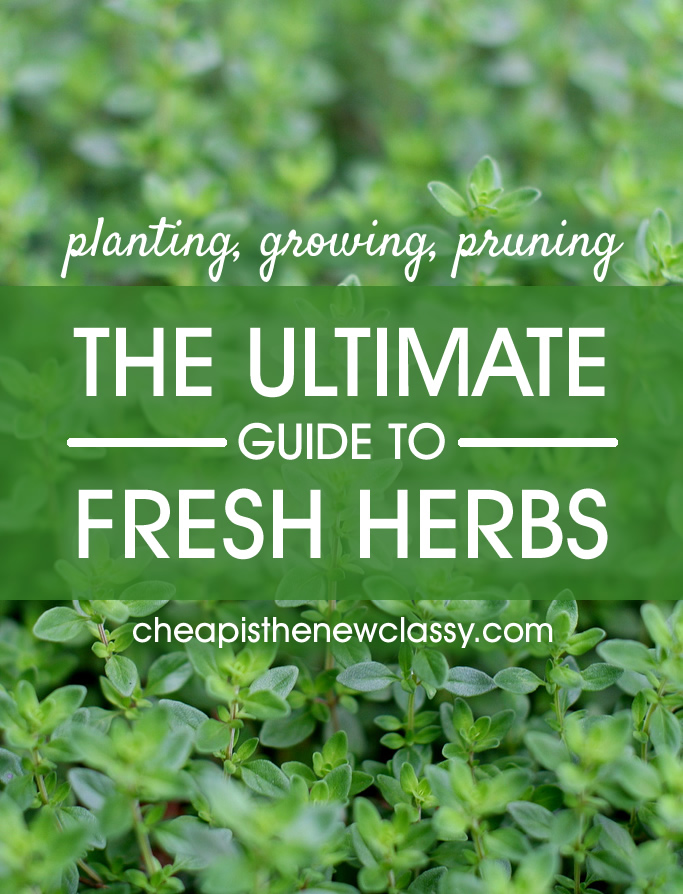 The Ultimate Guide To Fresh Herbs | Cheap Is The New Classy