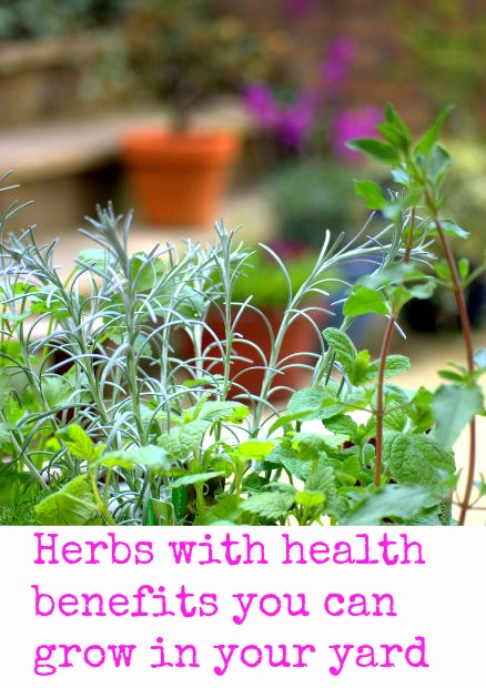 Herbs With Health Benefits That You Can Grow In Your Yard: The Ultimate Guide To Fresh Herbs | Cheap Is The New Classy
