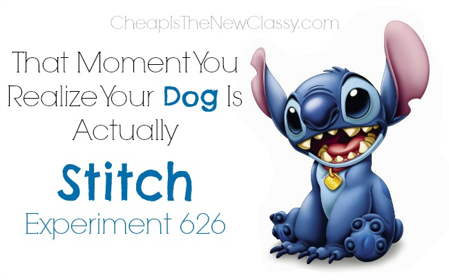Disneyside Dog: That Moment I Realized My Dog Is Really Stitch #disneyside