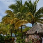 Mexican Plants: Flowers, Trees and Shrubs we saw on our Caribbean Cruise port of call in Cozumel, Mexico