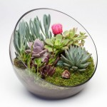 DIY Terrarium Kit For Succulents, Cacti & Other Air Plants #sponsored