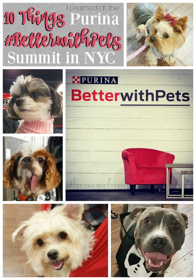 10 Things I Learned At The 4th Annual Purina #BetterWithPets Summit [ad] #LetsLiveBig