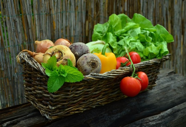 Vegetable Gardening: Saving Money and Living Healthy