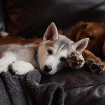 8 Awesome Tips to Help Your Dog Relax After a Long Day
